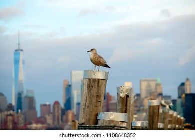 A small seagull stands in a pole in front of the New York City skyline