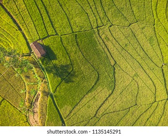 Small shack in green terrace rice field with line pattern Aerial Photography view; Yogyakarta, Indonesia - 15 July 2018