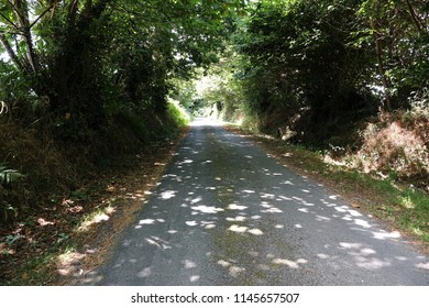 Small shady country road