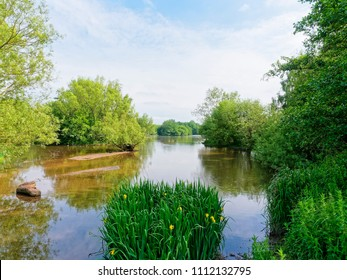 A small, shallow, lake is surrounded by trees and shrubs. Reeds and yellow flag iris grow at the lake edge.