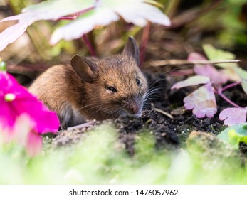 Small shrew in flower bed