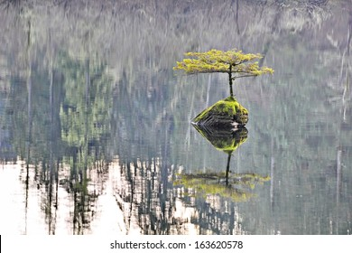 A small shrub tree grows against the odds setting roots up alone in the middle of a lake on a small outcropped rock with only it's reflection for company.