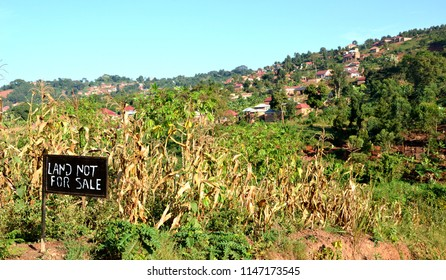 Small Sign posts  hanged in peaces land to protect land grabbers in Uganda.
