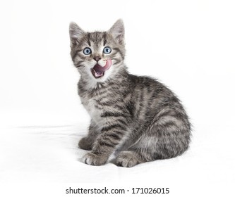 small sitting cat, licking with the tongue over mouth, white background, isolated