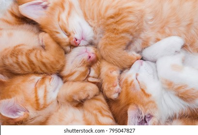 A lot of small sleeping red kittens sleep in a heap nestle to each other in a cozy bed, the concept of friendship, brothers, twins babes beautiful lovely pets