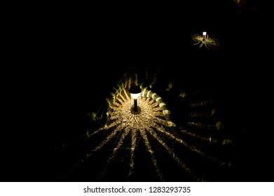Small Solar powered Garden Light, illuminating the garden of a cottage. The light is creating a starburst pattern on the tree roots along the trail.