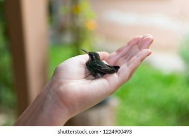 Small sparking hummingbird bird perched on a woman's hand. Background blurred.