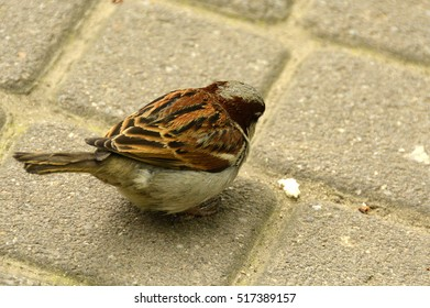 a small sparrow in the city park