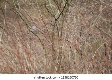 Small sparrow hiding in bush