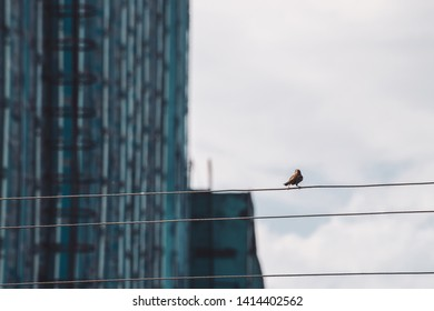 Small sparrow walks on wires. Little bird on cable in industrial area. Birdie on wire on background of building wall in bokeh. Funny winged feathered animal on cables. Bird in urban environment.