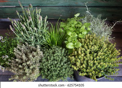 Small spice herb garden on a rustic wooden table