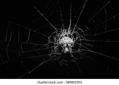 Small Spider on cobweb.