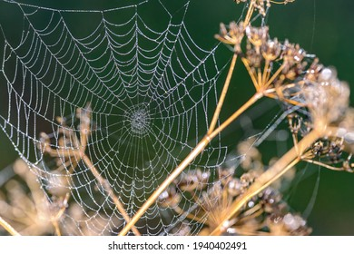 A small spider web covered with dew. No spider present. Green background, shallow depth of field. Dead plants in front and behind.