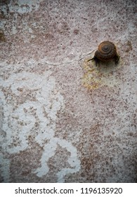 small spiral round curve shell of a snail,  on a tropical tree in garden wall with lichens creeping slowly and peacefully selective focus with blur background