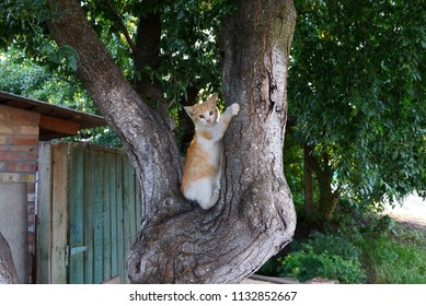 small spotted cat sitting on the gray trunk of a tree