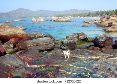 A small spotted puppy on the stony shore of the Andaman Sea in Indian GOA