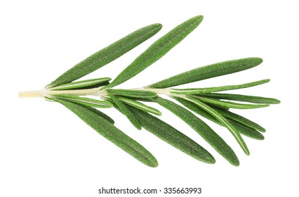 small sprig of fresh rosemary isolated on white background