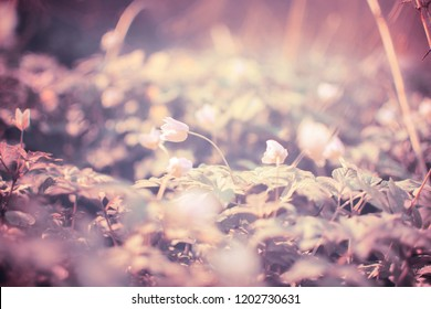 Small spring light flowers. Flower background. WIld flowers background. Colorful nature background