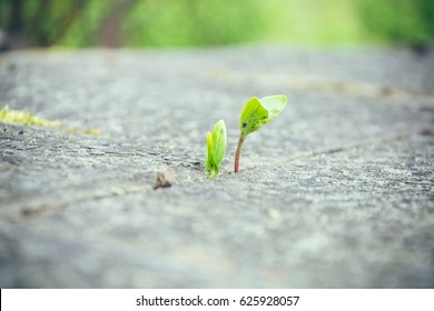 Small spring plant growing up through a crack between paving stones symbolic of the season in a low angle view