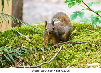 Small Squirrel in summer forest background wild nature animal