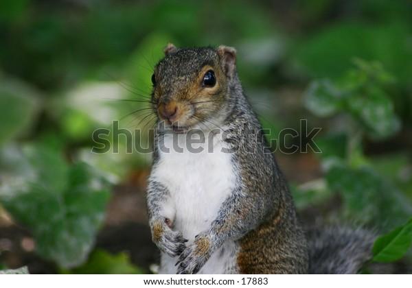 Small squirrel very close at Niagara Falls State Park.