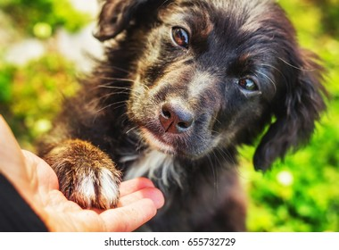 Small stray puppy touching a human hand with a paw (shallow dof)