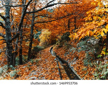 Small stream canal (acequia) in Spain covered by the fall leaves in autumn