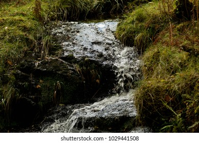 Small Stream Flowing Down Forest