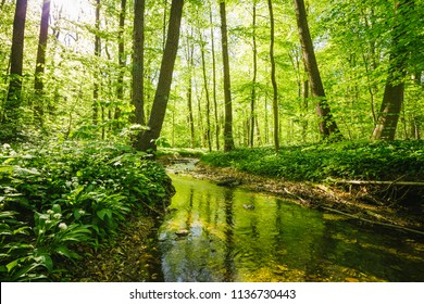 Small stream flowing through a green deciduous forest