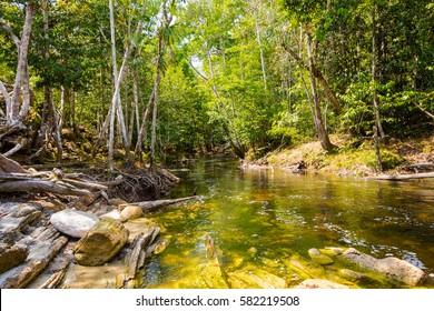 Small stream flows into the amazon forest, in Presidente Figueiredo, Amazonas, Brazil.