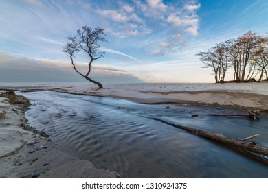 Small stream flows into the sea through the beach. Lonely tree.