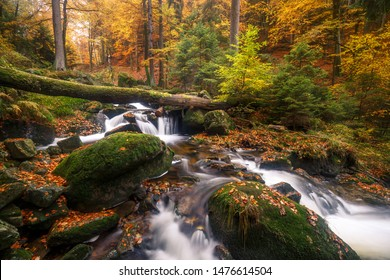 A small stream flows through a colorful autumn forest in the Ilsetal, the Harz national Park