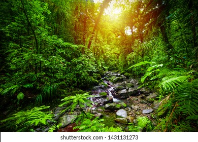 Small stream in Guadeloupe jungle at sunset. Lesser Antilles, Caribbean