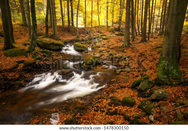 Small stream meanders through a colorful autumn forest in the middle of the Harz national Park