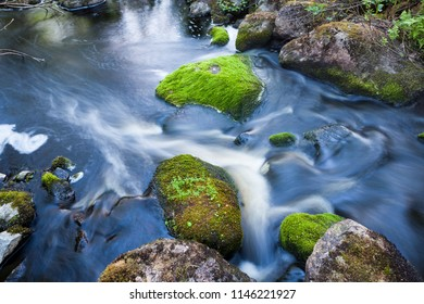 Small stream in mixed forest Finland nature