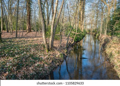 Small stream with a reflecting surface in a Dutch forest in autumn colors and with bare trees. It is a sunny day at the end of the winter season.