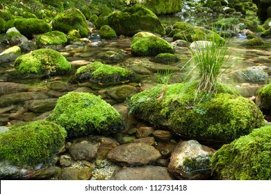 Small stream with rocks covered with moss