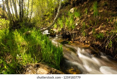 Small stream in Spring, in Rocky Mountains Aspen Forest