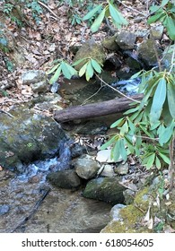 small stream through the forest with mossy rocks, brown twigs and green rhododendron leaves.