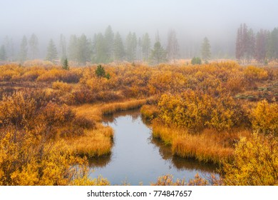 Small stream winds through low scrub brush colored orange by the fall season with foggy forest in background