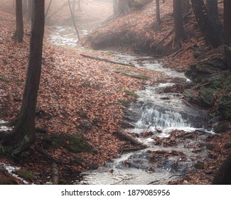 A small stream in a woodland valley on a misty day