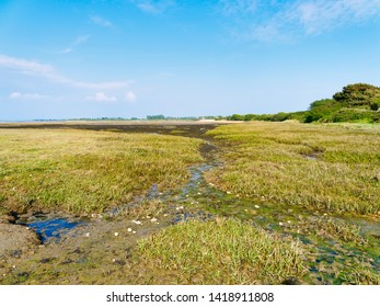 Small streams criss-cross West Wittering saltmarsh on a bright spring day.