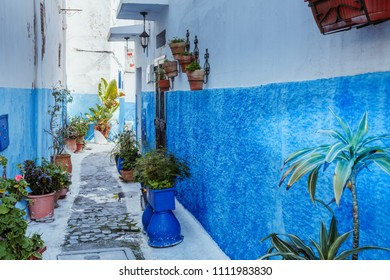 Small streets with flowers in blue and white in the kasbah of old city Rabat in Marocco on sunny day