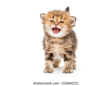 microchipping cat cost