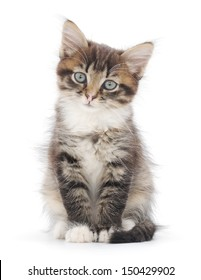 Small striped kitten on a white background