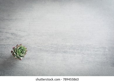 Small succulent over grey stone background