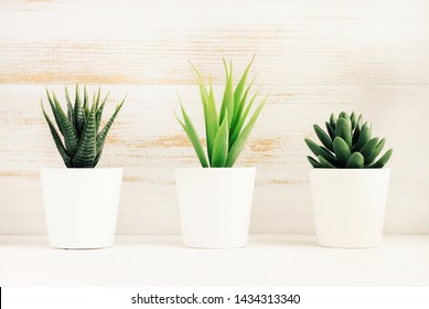 Small succulent plants in flower pots on white wooden background, eco botanical home decor, bathroom shelf