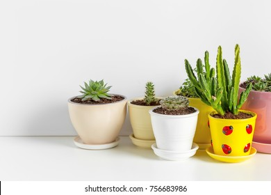 Small succulent plants in pots in home interior