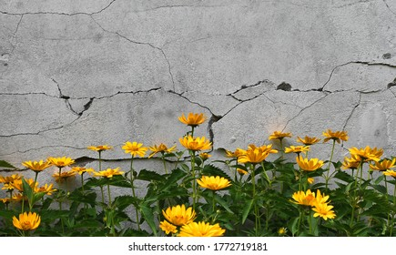 small sunflowers in the background of a cracked wall - Shutterstock ID 1772719181