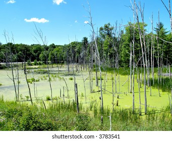 A small swamp at the side of the road in Pennsylvania